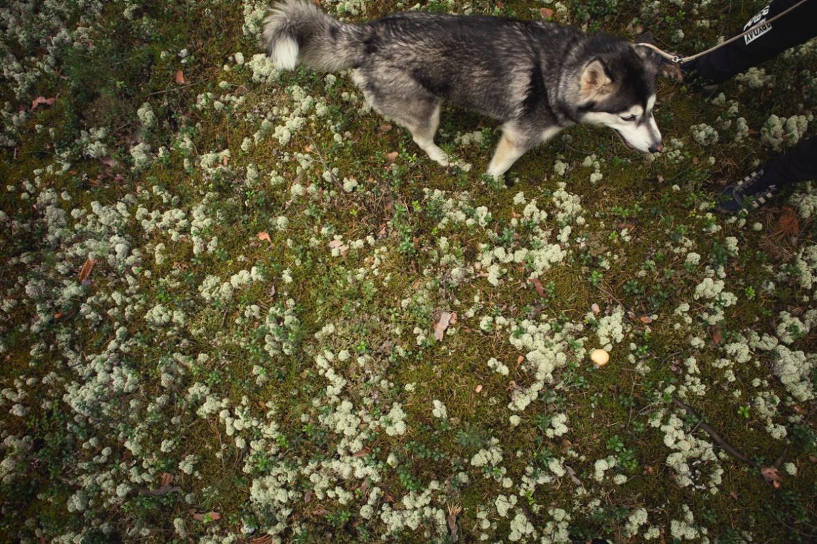 husky bts small (6)